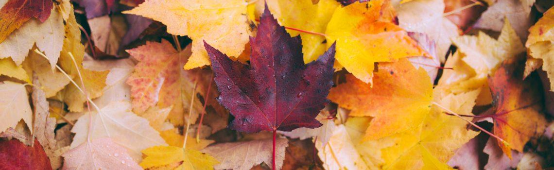 Herfst: vasthouden en loslaten